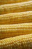 玉米棒子 库存图片