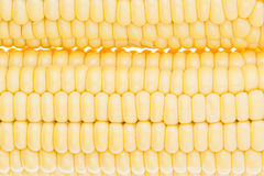 玉米棒子clouseup 新鲜的玉米特写镜头 纹理 库存图片