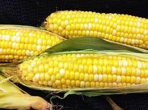 玉米棒新鲜玉米的农场 库存照片