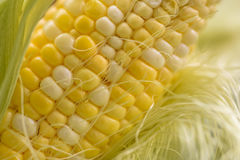 玉米棒煮熟的玉米甜点 库存照片