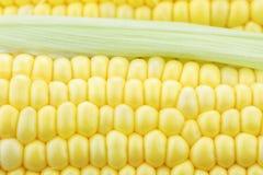 玉米棒玉米宏指令 库存照片