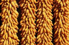 玉米棒玉米 免版税图库摄影