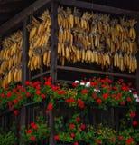 玉米棒 免版税库存图片