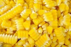 玉米植入背景 免版税库存照片