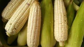 玉米泰国 免版税库存照片