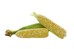 玉米混杂的空白黄色 免版税库存照片