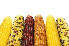 玉米烘干了印地安人 库存图片
