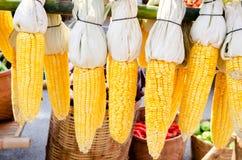 玉米烘干了 免版税库存照片