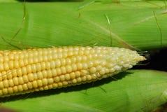 玉米甜点 库存照片