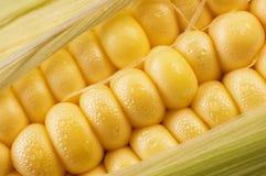 玉米甜点 库存图片