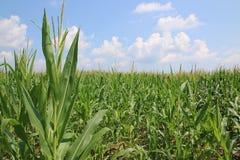 玉米田和云彩在农村宾夕法尼亚 免版税图库摄影