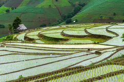 玉米田和农场 免版税库存图片