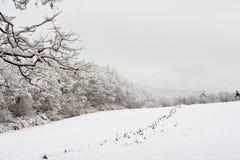 玉米田和树在冬天雪 库存照片