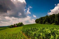 玉米田和谷仓一个农场的在南约克县, PA。 免版税库存照片
