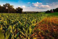 玉米田和谷仓一片农田的在农村乡下 免版税库存照片