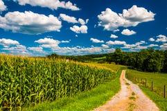 玉米田和车道对一个农场在农村南约克县, 免版税库存照片