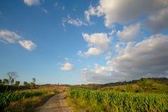 玉米田和车道对农场 库存照片