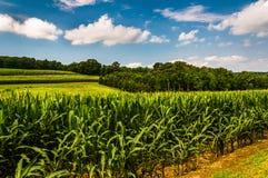 玉米田和辗压小山在南约克县, PA 免版税图库摄影
