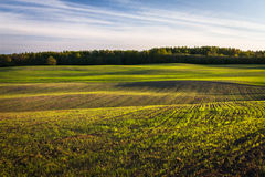 玉米田在早期的春天 图库摄影