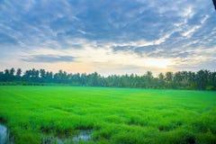 玉米田在泰国的早晨,美丽的绿色玉米田有日落天空背景 库存图片