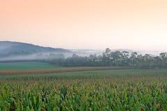 玉米田有雾的日出 库存照片