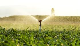 玉米田灌溉 免版税图库摄影