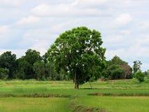 玉米田,泰国的美妙的看法 免版税库存照片