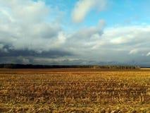 玉米白天域收获 图库摄影