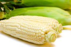 玉米白色 库存照片