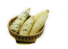 玉米白色 免版税图库摄影