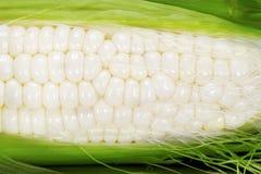 玉米白色 免版税库存图片