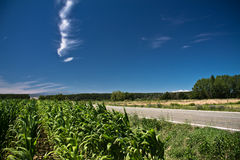 玉米的五颜六色的领域由路的在蓝天在夏天 库存图片
