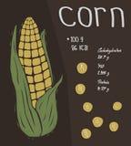 玉米的信息,营养事实概念 免版税库存图片