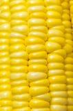 玉米的图象 图库摄影