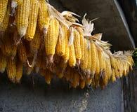 从玉米的捆绑 库存照片
