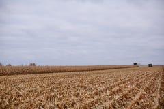玉米的新近地被收获的领域与发茬的 图库摄影