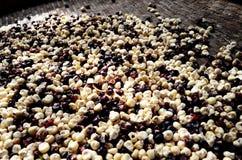 玉米种子是白色和紫色的 免版税库存照片