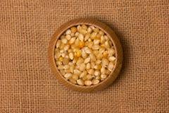 玉米种子 免版税库存图片