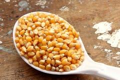 玉米种子 图库摄影