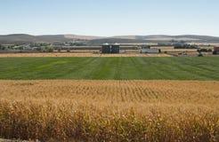 玉米种植园和加工设备工厂 免版税库存图片