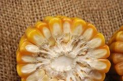 玉米种植园 库存照片