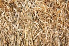 玉米秸杆 免版税库存照片