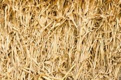 玉米秸杆 免版税图库摄影