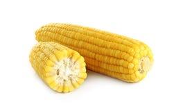 玉米穗在白色背景的 免版税图库摄影