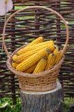 玉米穗在篮子的 库存图片