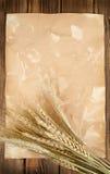 玉米穗麦子 免版税库存照片