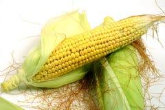玉米穗,与空间的特写镜头拷贝的 免版税图库摄影