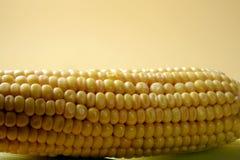 玉米穗,与空间的特写镜头拷贝的 免版税库存照片