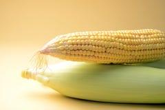 玉米穗,与空间的特写镜头拷贝的 库存图片