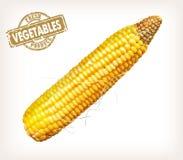 玉米穗 免版税图库摄影